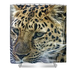 Close Up Of Leopard Shower Curtain