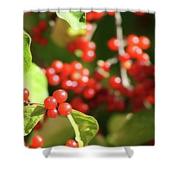 Close Up Of Red Berries Shower Curtain