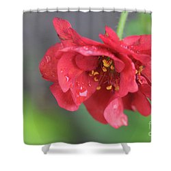 Close-up Of Red Flower Shower Curtain