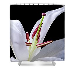 Close-up Photograph Of A White Oriental  Lily Shower Curtain