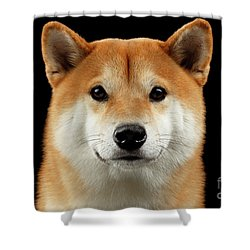 Close-up Portrait Of Head Shiba Inu Dog, Isolated Black Background Shower Curtain by Sergey Taran