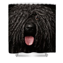 Close Up Portrait Of Puli Dog Isolated On Black Shower Curtain by Sergey Taran