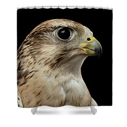 Close-up Saker Falcon, Falco Cherrug, Isolated On Black Background Shower Curtain