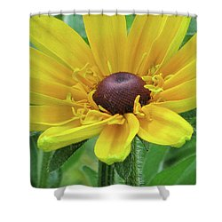 Close Up Summer Daisy Shower Curtain
