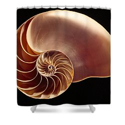 Close View Of Chambered Nautilus Shower Curtain by Victor R. Boswell, Jr