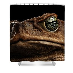 Closeup Cane Toad - Bufo Marinus, Giant Neotropical Or Marine Toad Isolated On Black Background Shower Curtain