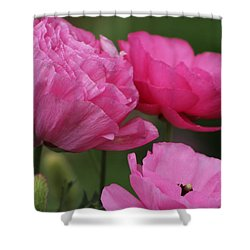 Closeup Deep Peony Pink Ranunculus Shower Curtain