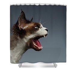 Closeup Devon Rex Hisses In Profile View On Gray  Shower Curtain