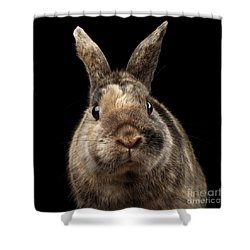 Closeup Funny Little Rabbit, Brown Fur, Isolated On Black Backgr Shower Curtain