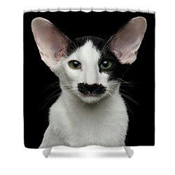 Closeup Funny Oriental Shorthair Looking At Camera Isolated, Bla Shower Curtain by Sergey Taran