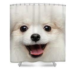 Closeup Furry Happiness White Pomeranian Spitz Dog Curious Smiling Shower Curtain by Sergey Taran