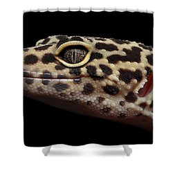 Closeup Head Of Leopard Gecko Eublepharis Macularius Isolated On Black Background Shower Curtain