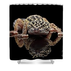 Closeup Leopard Gecko Eublepharis Macularius Isolated On Black Background, Front View Shower Curtain