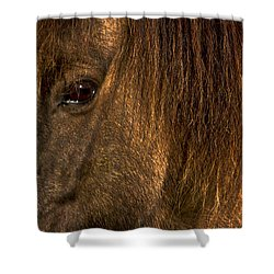 Closeup Of An Icelandic Horse #2 Shower Curtain