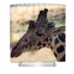 Closeup Of Giraffe Shower Curtain by Colleen Cornelius