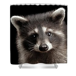 Closeup Portrait Cute Baby Raccoon Isolated On Black Background Shower Curtain