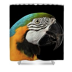 Closeup Portrait Of A Blue And Yellow Macaw Parrot Face Isolated On Black Background Shower Curtain