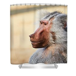 Shower Curtain featuring the photograph Closeup Portrait Of A Male Baboon by Nick Biemans