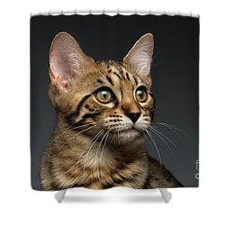 Closeup Portrait Of Bengal Male Kitty On Dark Background Shower Curtain by Sergey Taran