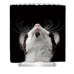 Closeup Portrait Of Cornish Rex Looking Up Isolated On Black  Shower Curtain by Sergey Taran