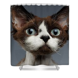 Closeup Portrait Of Devon-rex Looking In Camera On Gray  Shower Curtain