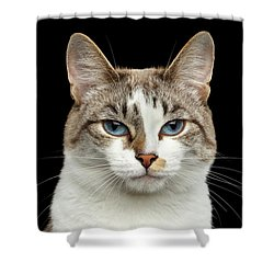 Closeup Portrait Of Face White Cat, Blue Eyes Isolated Black Background Shower Curtain