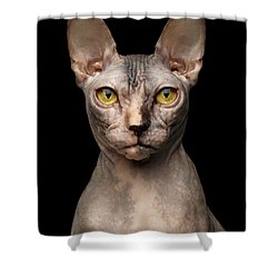 Closeup Portrait Of Grumpy Sphynx Cat, Front View, Black Isolate Shower Curtain