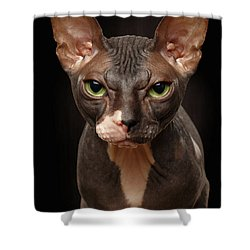 Closeup Portrait Of Grumpy Sphynx Cat Front View On Black  Shower Curtain by Sergey Taran