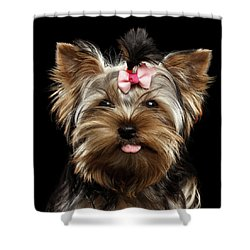 Closeup Portrait Of Yorkshire Terrier Dog On Black Background Shower Curtain