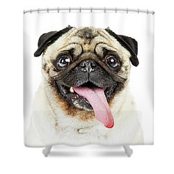 Closeup Pug Dog Tongue Hanging Out Shower Curtain