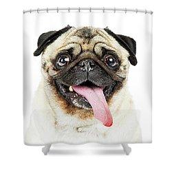 Closeup Pug Dog Tongue Hanging Out Shower Curtain