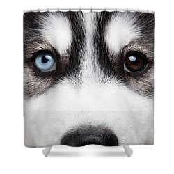 Closeup Siberian Husky Puppy Different Eyes Shower Curtain by Sergey Taran