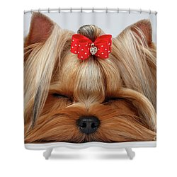 Closeup Yorkshire Terrier Dog With Closed Eyes Lying On White  Shower Curtain by Sergey Taran