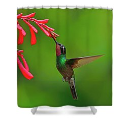 Cloud Forest Edge Shower Curtain