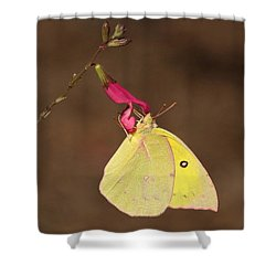 Clouded Sulphur Butterfly On Pink Wildflower Shower Curtain by Sheila Brown