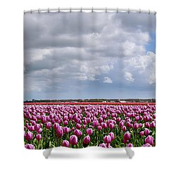 Clouds Over Purple Tulips Shower Curtain