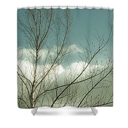Shower Curtain featuring the photograph Cloudy Blue Sky Through Tree Top No 1 by Ben and Raisa Gertsberg