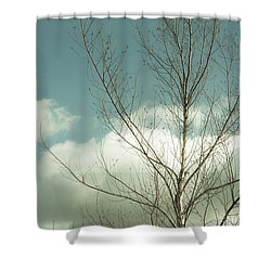 Shower Curtain featuring the photograph Cloudy Blue Sky Through Tree Top No 2 by Ben and Raisa Gertsberg