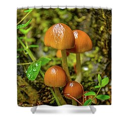 Clover Cover  Shower Curtain