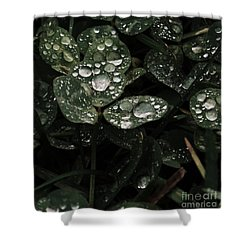Shower Curtain featuring the photograph Clover Gems by J L Zarek