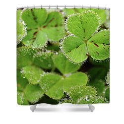 Cloverland Frosted Over Shower Curtain