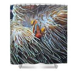 Clown Fish Shower Curtain by Michael Peychich