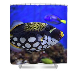 Clown Trigger Fish Shower Curtain