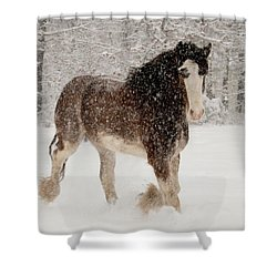 Clydesdale In The Snow Shower Curtain