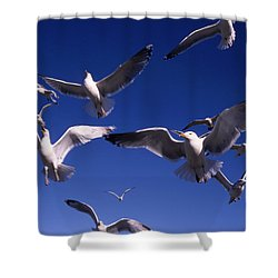 Cnrg0302 Shower Curtain