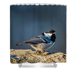 Shower Curtain featuring the photograph Coal Tit's Colors by Torbjorn Swenelius