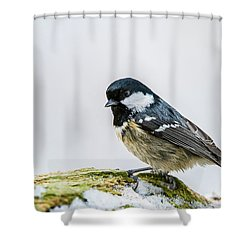 Shower Curtain featuring the photograph Coal Tit's Profile by Torbjorn Swenelius