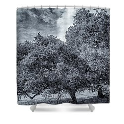 Coast Live Oak Monochrome Shower Curtain
