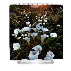 Coastal Calla Lilies Shower Curtain