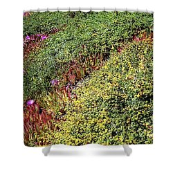 Coastal Flowers And Ice Plant Shower Curtain by Ted Pollard